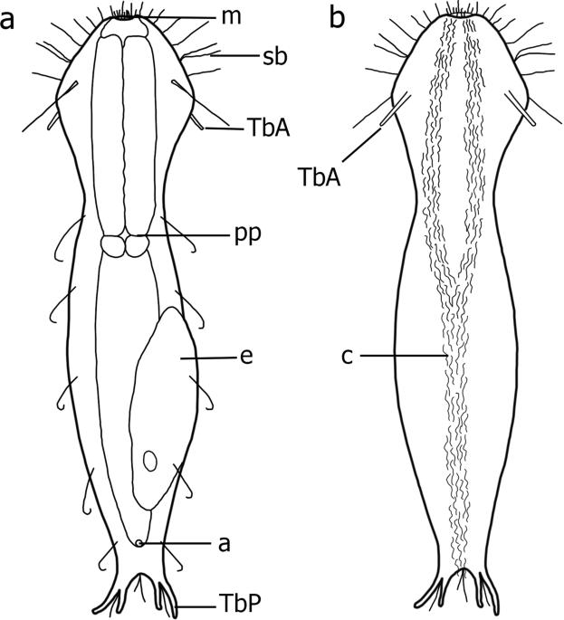 Integrative taxonomy of a new Redudasys species