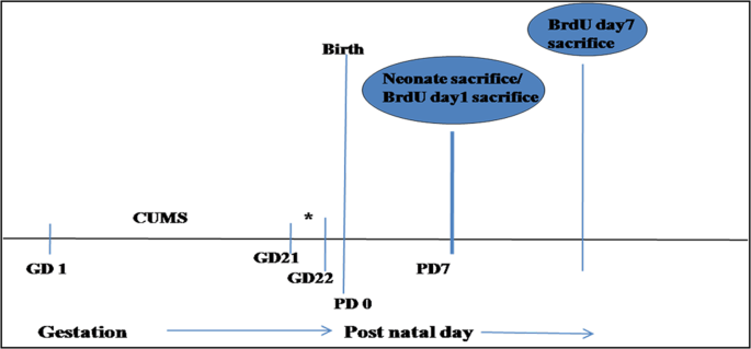 Effects of chronic unpredictable mild stress induced