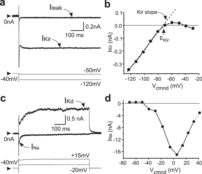 Ionic current correlations are ubiquitous across phyla