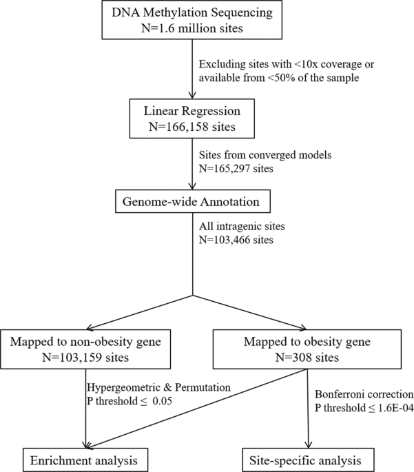 Association between DNA methylation in obesity-related genes and body mass index percentile in adolescents
