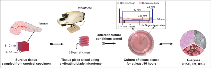 Ex Vivo Organotypic Culture System Of Precision