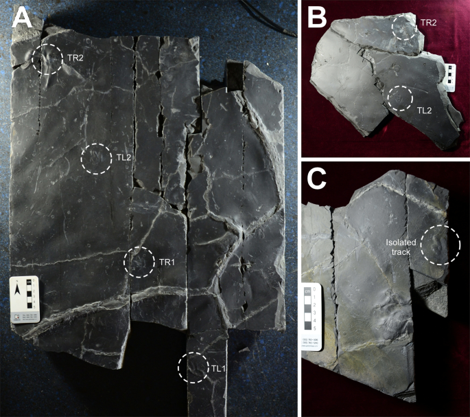 Exquisitely-preserved, high-definition skin traces in diminutive theropod tracks from the Cretaceous of Korea