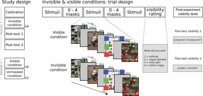 Imaging Object Scene Relations Processing In Visible And Invisible Natural Scenes Scientific Reports