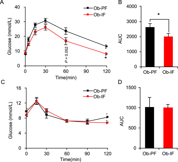 Thermogenesis-independent metabolic benefits conferred by isocaloric intermittent fasting in <i>ob</i>/<i>ob</i> mice