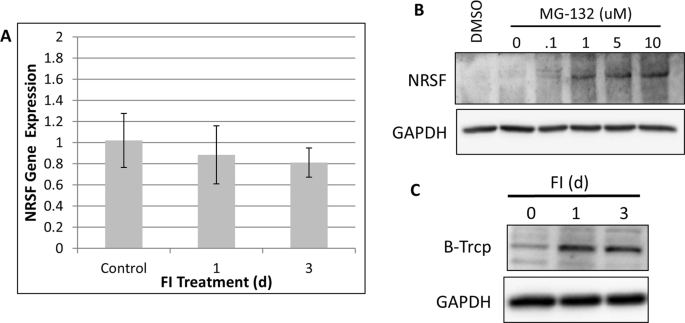 Forskolin and IBMX Induce Neural Transdifferentiation of