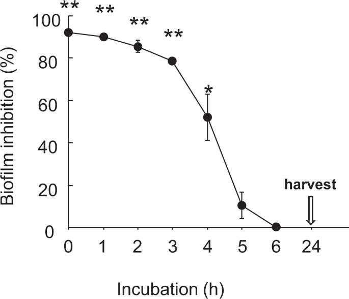 Inhibitory Effects Of Polysorbate 80 On MRSA Biofilm