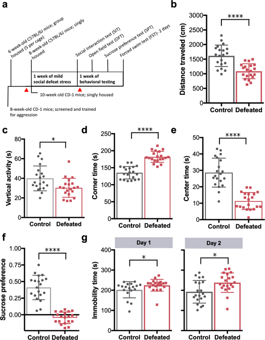 QnA VBage Relative abundance of Akkermansia spp. and other bacterial phylotypes correlates with anxiety- and depressive-like behavior following social defeat in mice