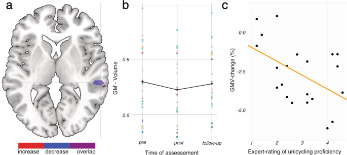 Learning Unicycling Evokes Manifold Changes in Gray and White Matter
