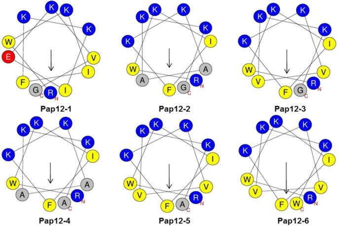 Development Of A Novel Short 12 Meric Papiliocin Derived Peptide That Is Effective Against Gram Negative Sepsis Scientific Reports