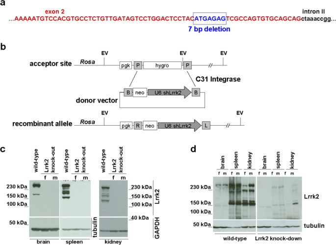 The Parkinson's disease-linked Leucine-rich repeat kinase 2 (LRRK2