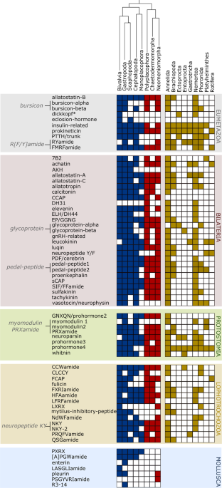 Extensive conservation of the proneuropeptide and peptide prohormone ...