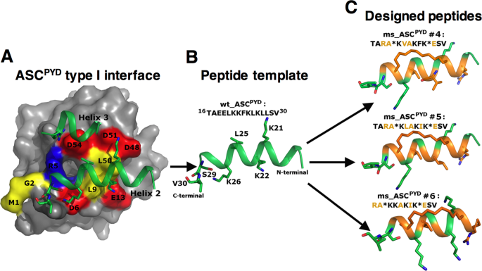 Inhibition of NLRP3 inflammasome activation by cell-permeable