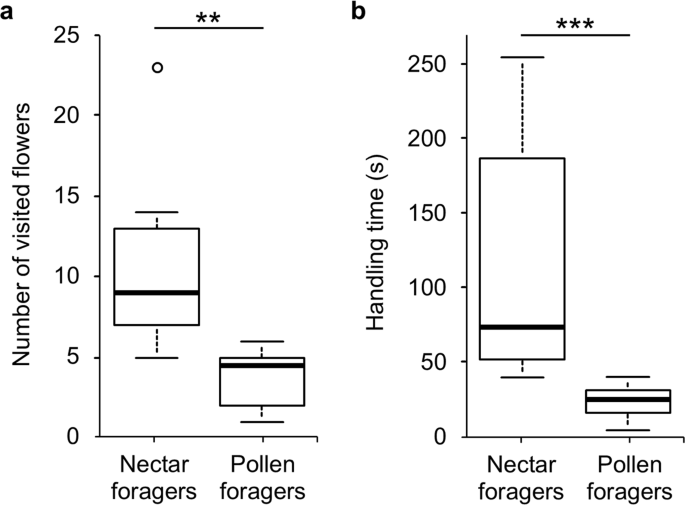 Pollen grain morphology is not exclusively responsible for pollen collectability in bumble bees
