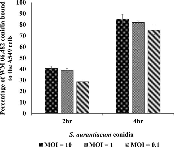 Interactions of an Emerging Fungal Pathogen Scedosporium