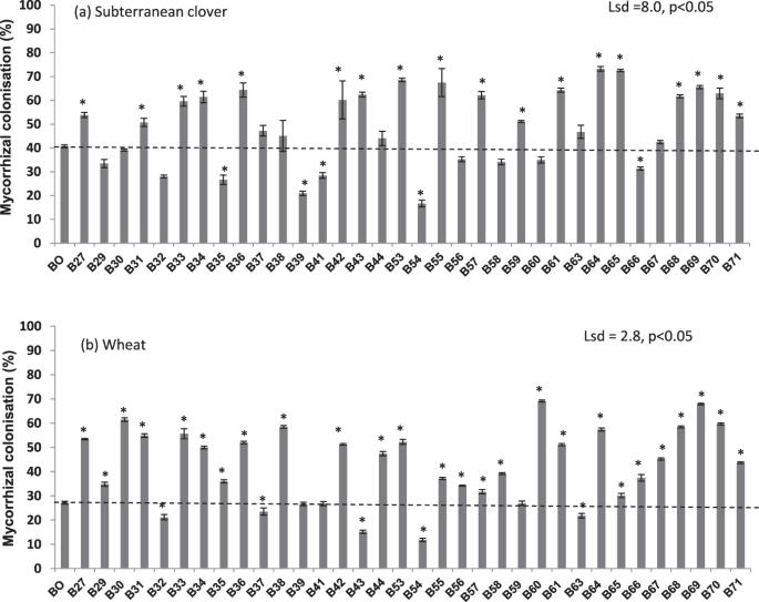Biochar phosphorus concentration dictates mycorrhizal