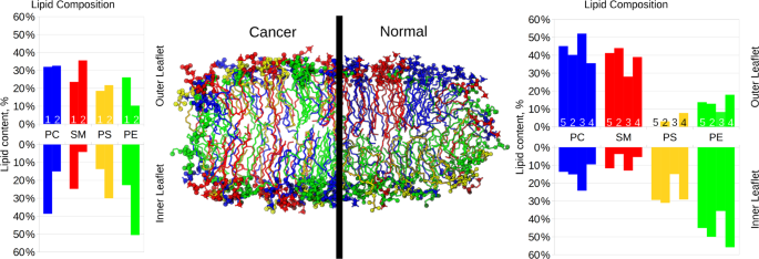 The asymmetry of plasma membranes and their cholesterol
