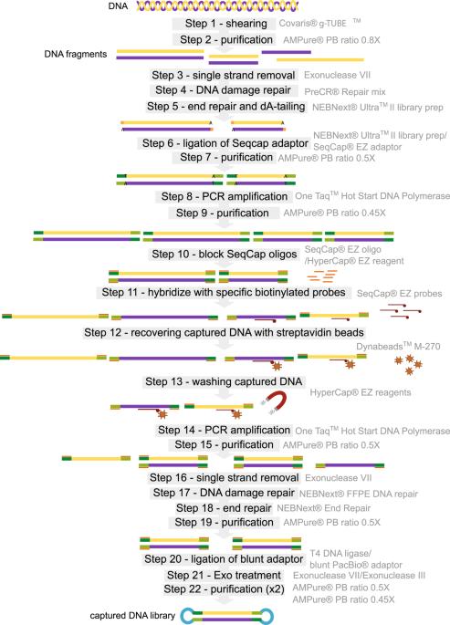 Large Enriched Fragment Targeted Sequencing (LEFT-SEQ