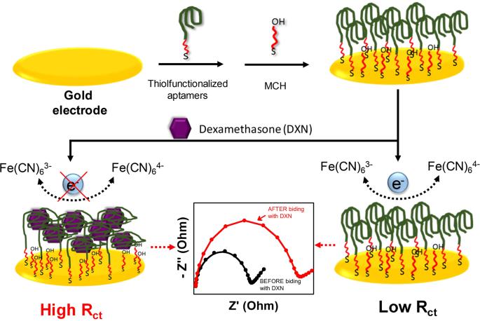 Brilliant Selection Of High Affinity Aptamer Ligand For Dexamethasone And Its Wiring 101 Archstreekradiomeanderfmnl
