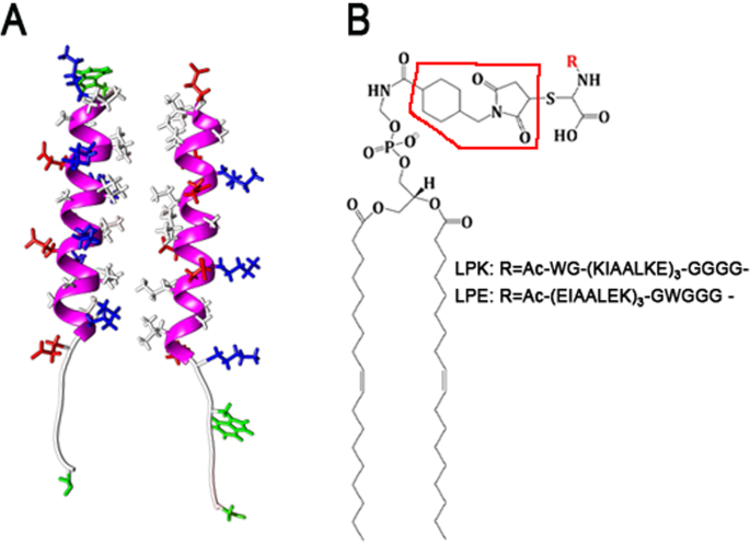Interaction Of Snare Mimetic Peptides With Lipid Bilayers Effects