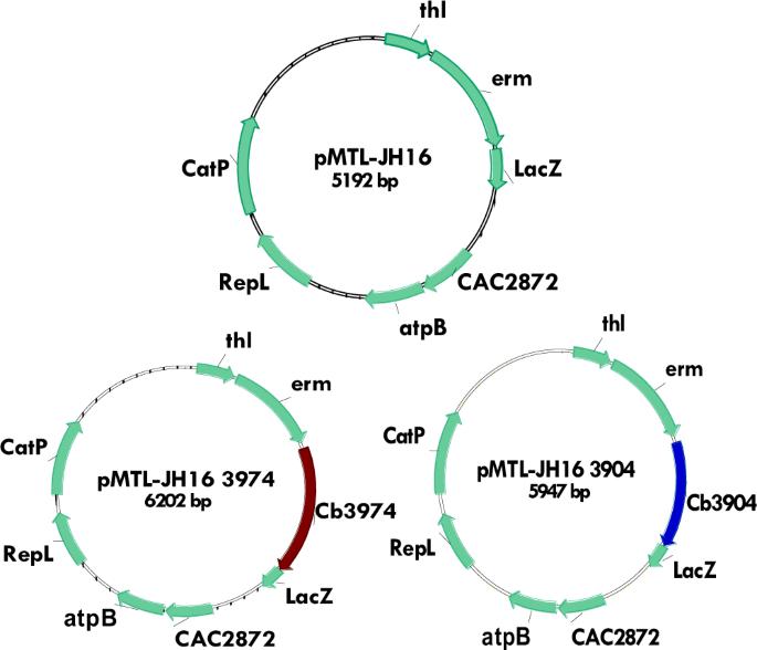 Chromosomal Integration Of Aldo-keto-reductase And Short