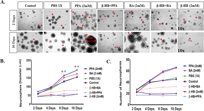 Propionic Acid Induces Gliosis and Neuro-inflammation through