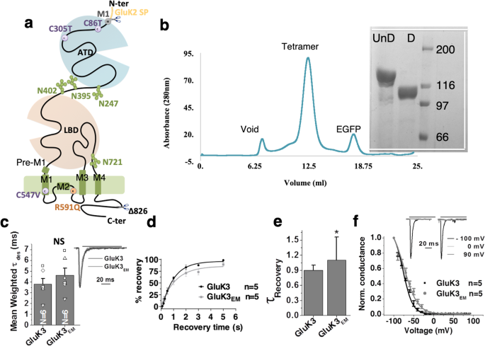 Studies Highlight Lasting Effects Of >> Structural And Functional Insights Into Gluk3 Kainate Receptor