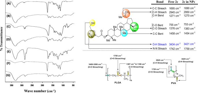 Nanoencapsulated betulinic acid analogue distinctively improves
