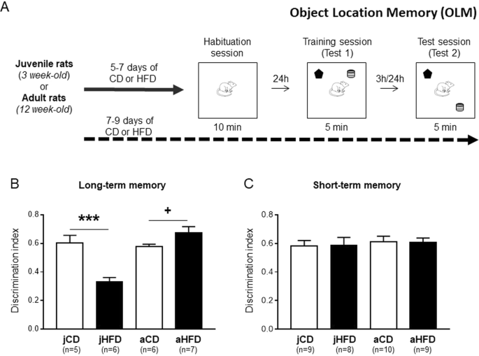 high fat diet in mice and memory