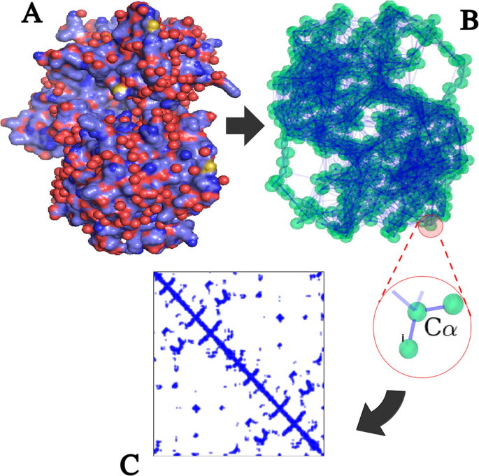 Universality of fold-encoded localized vibrations in enzymes
