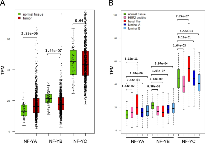 Overexpression And Alternative Splicing Of Nf Ya In Breast Cancer Scientific Reports
