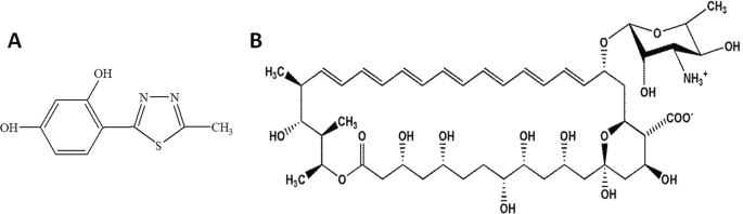 Synergistic antifungal interactions of amphotericin B with 4