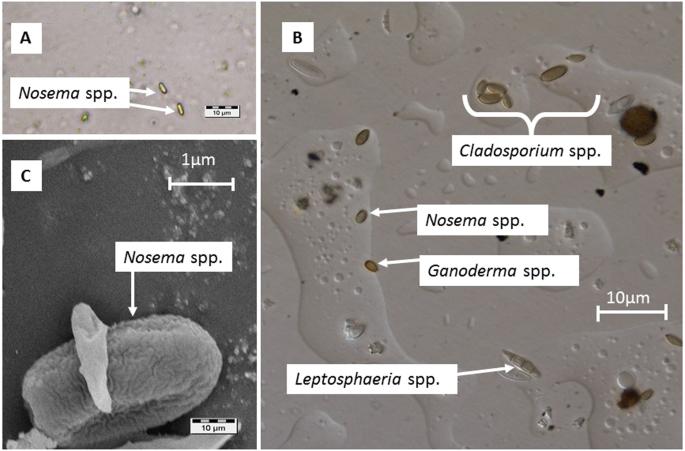 paraziták az aquában mikulás a férgektől