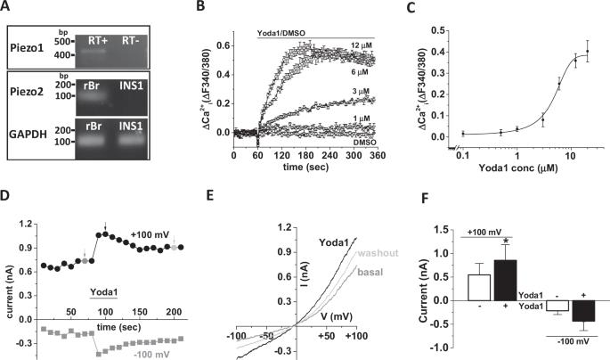 cell Glucose penetration mimics