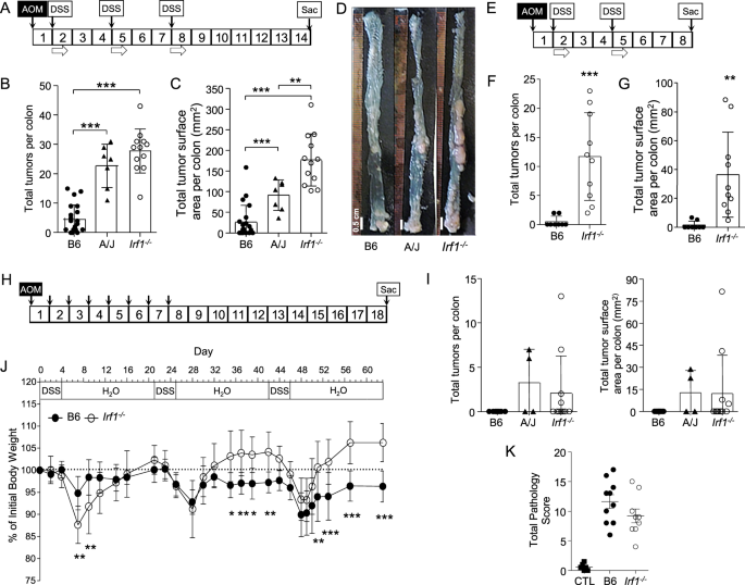Inactivation Of Interferon Regulatory Factor 1 Causes Susceptibility To Colitis Associated Colorectal Cancer Scientific Reports