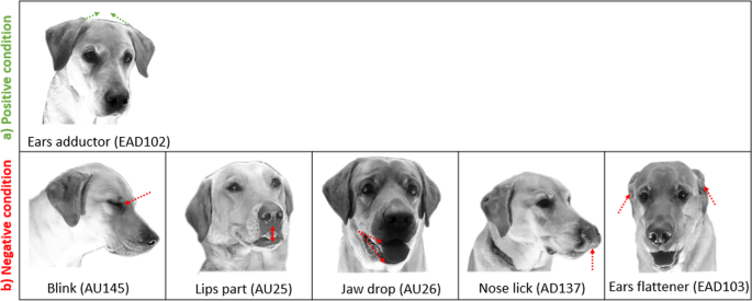 Differences in facial expressions during positive anticipation and frustration in dogs awaiting a reward