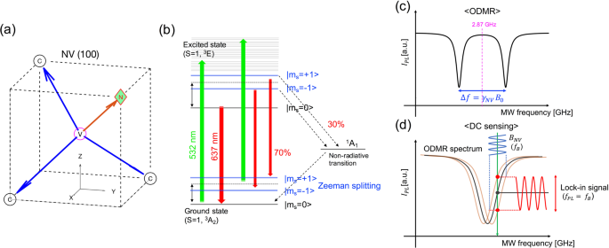 Magnetometer with nitrogen-vacancy center in a bulk diamond for detecting magnetic nanoparticles in biomedical applications