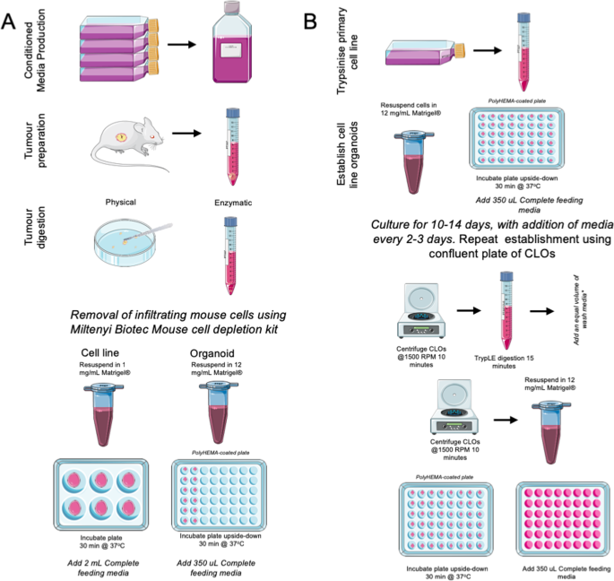 Modelling of pancreatic cancer biology: transcriptomic signature for 3D PDX-derived organoids and primary cell line organoid development