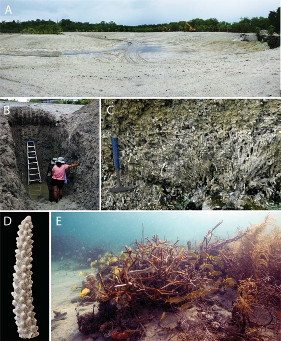 Defining variation in pre-human ecosystems can guide conservation: An example from a Caribbean coral reef
