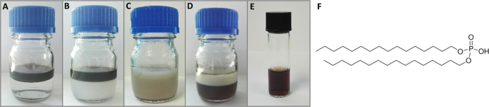 Bioevaluation of superparamagnetic iron oxide nanoparticles (SPIONs) functionalized with dihexadecyl phosphate (DHP)