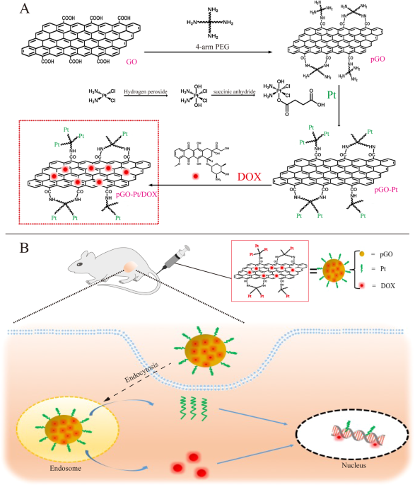 PEGylated nano-graphene oxide as a nanocarrier for delivering mixed anticancer drugs to improve anticancer activity