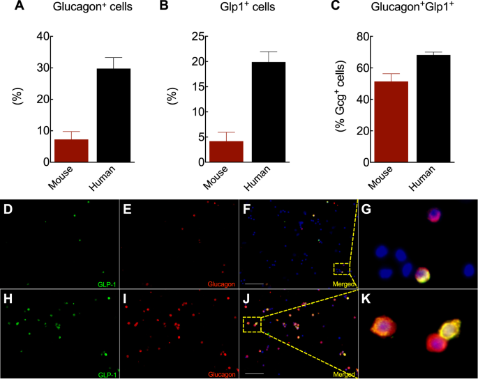 Intra-islet GLP-1, but not CCK, is necessary for β-cell function in mouse and human islets