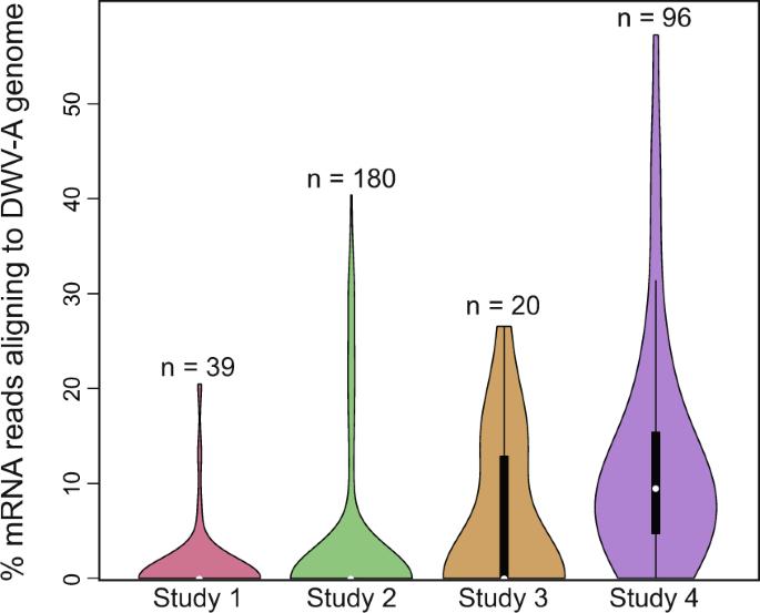 Meta-analysis of honey bee neurogenomic response links Deformed wing virus type A to precocious behavioral maturation
