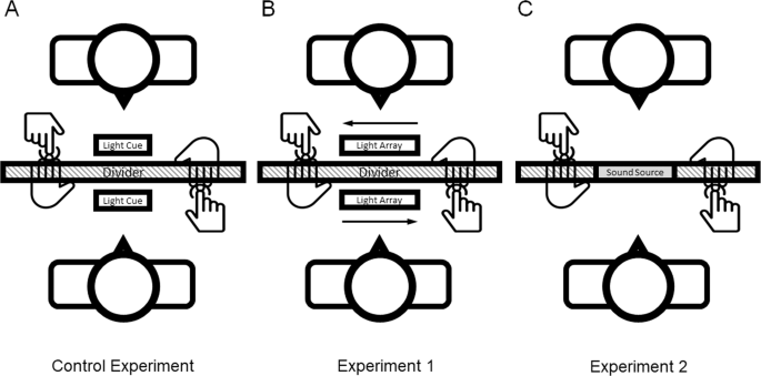 Egocentric Temporal Order Bias Robust Across Manipulations of Cue Predictability and Sensory Modality