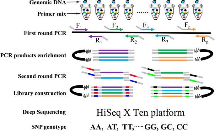 A new SNP genotyping technology Target SNP-seq and its application ...