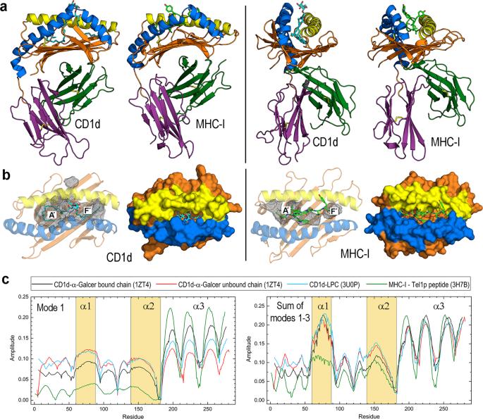Dynamic Plasticity Of The Lipid Antigen-binding Site Of
