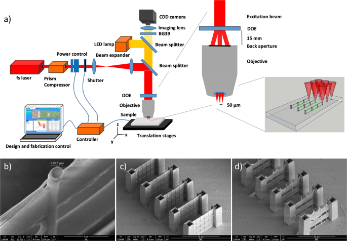 Multi-beam two-photon polymerization for fast large area 3D periodic structure fabrication for bioapplications