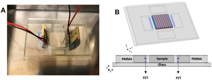 Effect of acoustic standing waves on cellular viability and metabolic activity