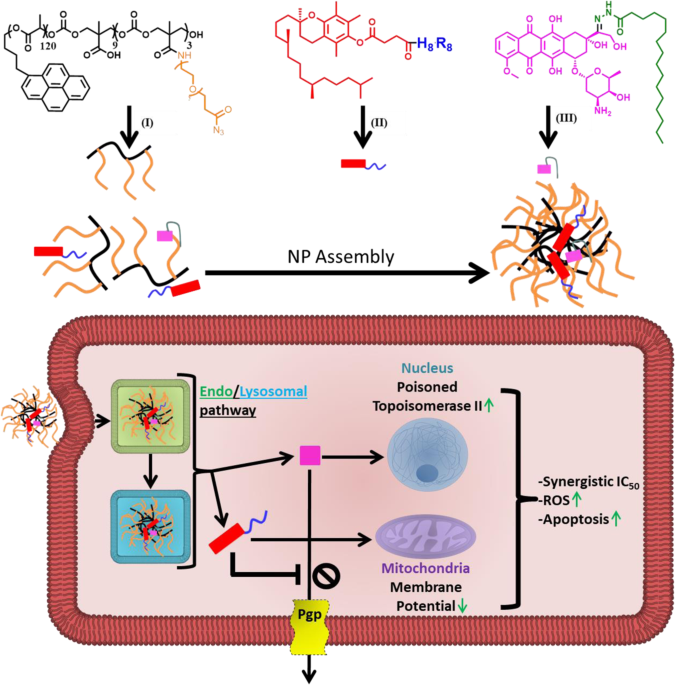 Nanoparticle delivery of a pH-sensitive prodrug of doxorubicin and a mitochondrial targeting VES-H8R8 synergistically kill multi-drug resistant breast cancer cells