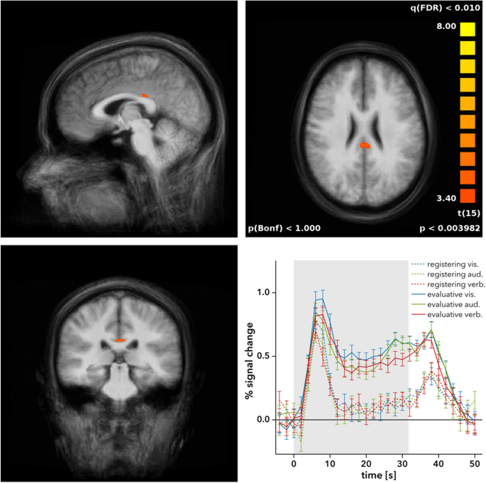 Dorsal posterior cingulate cortex encodes the informational value of feedback in human–computer interaction