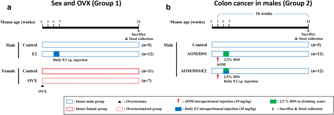 17b Estradiol Supplementation Changes Gut Microbiota Diversity In Intact And Colorectal Cancer Induced Icr Male Mice Scientific Reports